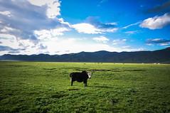 (QueenNomad) Tags: tibet kham