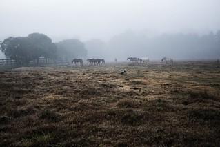#295 of 365 days - Fog & freeze