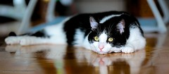 Kater Lucky beobachtet (Kurt Hollstein) Tags: cat canon indoor lucky kater 6d l42105mm