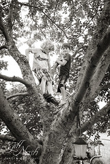 We need a tree like this! (grilljam) Tags: summer ewan cato treeclimbing 65yrs june2016 swangofarm
