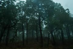 Niebla el Bosque (}JoAnto{) Tags: mexico lluvia jalisco sierra bosque niebla tapalpa