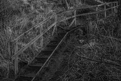 'Follow Me' (Akapov Photography) Tags: bw nature grass stairs 35mm canon climb steps sigma 6d