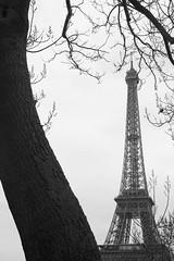 (zoso80-io son di un' altra razza,son bombarolo!) Tags: toureiffel albero parigi dialogo