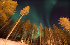 Ylläs: Yellow street lights+aquamarine (JulienSFX) Tags: blue trees winter sky ski green night forest finland skiing magic aurora lapland mystical magical sauna clearsky northernlights auroraborealis äkäslompolo borealforest ylläs kolari saunahouse