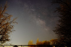 Seeing the galaxy for the trees