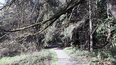 20160331_091804 (ks_bluechip) Tags: creek evans trails preserve sammamish usa2106