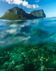 Coral and mountains, Lord Howe Island (NettyA) Tags: lordhoweforclimate 2016 australia day8 janetteasche lhi lordhoweisland nsw unescoworldheritage snorkelling thelagoon coral underwater water clear mtlidgbird mtgower ewamarine resistant camera housing sonyflickraward