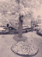 IMG_1686 - Canobie Lake Park (Syed HJ) Tags: blackandwhite bw canon ir blackwhite nh infrared salem canobielakepark salemnh 850nm g1x canong1x canobielakeparksalemnh