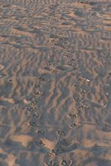 TH20160507A608555 (fotografie-heinrich) Tags: strand spuren ostsee zingst stdteortschaften