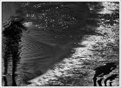 F_DSC9390-3-BW-Nikon D800E-Nikkor 28-300mm-May Lee  (May-margy) Tags: portrait bw blur reflection beach silhouette bokeh taiwan           taichungcity  repofchina maymargy nikkor28300mm nikond800e maylee  mylensandmyimagination streetviewphotographytaiwan  naturalcoincidencethrumylens  linesformandlightandshadows  fdsc93903bw
