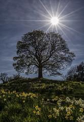 Yorkshire - U.K. (shellyparente) Tags: flowers trees england sky sun landscape countryside outdoor