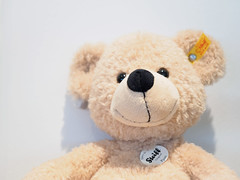Beary White (prozla) Tags: de deutschland teddy olympus ohr omd steiff fynn teddybr plschtier em1 badenwrttemberg stofftier knopf knopfimohr giengenanderbrenz