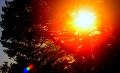 Red Sun II (Josh Rokman) Tags: sunset sky nikond7000 orange red nature outdoors tree treesun sun brightsun