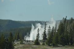 Grand Geyser, Yellowstone (David A's Photos) Tags: june grand yellowstonenationalpark wyoming geyser 2016 yellowstonetrip uppergeyserbasin