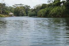 DSC02000 (numb3r) Tags: belize btb belizetourism wildlife rainforest mayan temples jungle belizezoo placencia belizecity authenticbelize tapir tucan