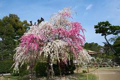 Hiroshima 17 (jacksonlife) Tags: a7rii