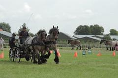 IMG_7669 (Snapshot(wo)man) Tags: rockanje powerhorse trekpaarden