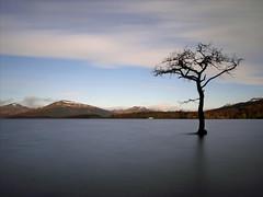 A tree grows in Loch Lomond (kenny barker) Tags: bon tree scotland trossachs millarochybay rès