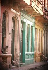 Centro Habana (Lou Morgan) Tags: street dog dogs latinamerica america buildings havana cuba centro latin caribbean habana hairless americas peruvian louisemorgan