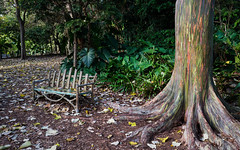 Rainbow retreat (littletinperson) Tags: color gardens rainbow florida eucalyptus impression coralgables d800 fairchildgardens nikond800 littletinperson