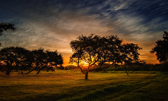 Windswept Tree at Sunset (WelshPixie) Tags: trees sunset strand landscape southafrica westerncape nikond7000