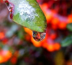 Frozen Water Drop