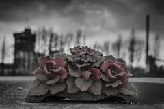 Dampremy 14 (jefvandenhoute) Tags: light cemetery graveyard photoshop nikon belgium belgique belgi selective charleroi colorization dampremy nikond800 photoshopcs6