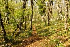Spring Wood (maureen bracewell) Tags: wood flowers trees italy nature sunshine landscape spring shadows path puglia maureenbracewell saariysqualitypictures