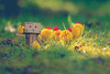 Happy Easter Flickr Friends! :) (*DollyLove*) Tags: macro chickens canon easter happy spring bokeh 100mm hens danbo danboard