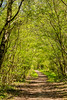 112.365.2015 - Tunnel (Claire Plumridge) Tags: trees plants nationalpark spring 365 berkshire day112 2015 greenhamcommon colourimage 365project bowdonwoods fujixt1 3652015 115picsin2015 115picturesin2015 1123652015