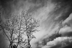 Spring is in the air (wabisabiph) Tags: sky flower tree nature clouds blackwhite spring hanami trentino wabisabiphotography fujifilmx100s fujifilmitalia