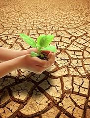 Giving life (Dreamcatcher photos) Tags: plant outdoors hands dry soil drought namibia soe arid dreamcatcherphotos