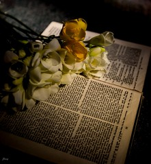 His Word (Janey Song) Tags: flowers shadow stilllife sunshine book bible omot ef1635mmf28liiusm canon5dmarkiii