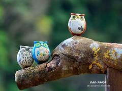 DAO-79405 (Chen Liang Dao  hyperphoto) Tags: taiwan