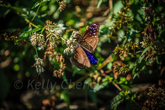 Taiwan-121113-247 (Kelly Cheng) Tags: travel color colour green tourism nature animals horizontal fauna butterfly daylight colorful asia day taiwan vivid nobody nopeople colourful traveldestinations  northeastasia