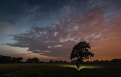 Twilight (Rob Pitt) Tags: light sunset lightpainting tree silhouette clouds twilight little flash pollution sutton ellesmereport 750d