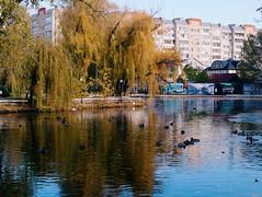 2015-11-10 07.27.14 1 (anastasiya_klenyaeva) Tags: trees sky autmn