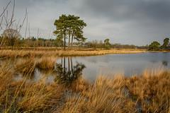 Hatertsevennen-69-1 (stevefge (away travelling)) Tags: sky nature water netherlands nederland natuur hatertsevennen nederlandvandaag reflectyourworld