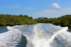 Canais do Mangue de Trememb (Carlos Amorim (Camorim10)) Tags: verde gua azul brasil bahia barra mara espuma mangue canais pennsula trememb graned