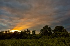 Last Try Sunset (thefisch1) Tags: light sunset sky cloud tree texture outdoors three interesting ray calendar sumac hills pasture kansas breakthrough flint streaming shaft oogle penetrate