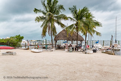 B36C5265 (WolfeMcKeel) Tags: vacation tree architecture club keys spring cabin key sailing florida cottage palm lime largo 2016 floridakeys2016vacationspring