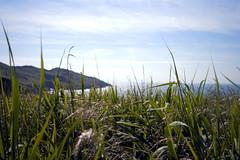 Looking through the reeds (Sazzaheaton) Tags: blue sea plants nature beautiful grass reeds coast looking walk horizon calming calm viewpoint apeture beautifuk