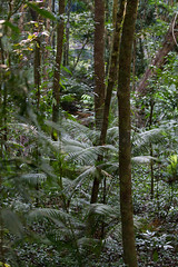 _MG_4508.jpg (MD & MD) Tags: family vacation june outdoor candid australia mossmangorge downunder 2016 otherkeywords