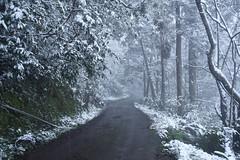 TaipeiSnow day (Iyhon Chiu) Tags: road winter snow cold snowy taiwan taipei       xindian 2016 sindian    newtaipeicity