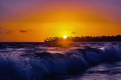 refreshing breeze ... (mariola aga) Tags: puntacana dominicanrepublic atlanticocean ocean water waves morning sky sun sunrise shoreline trees palmtrees silhouette light sunlight glow refreshingbreeze  thegalaxy