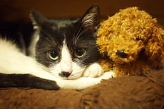 Temari 1 (lakeside_cat) Tags: cat pet animal    temari nikond3s nikon d3s