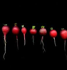 57400.01 Raphanus sativus (horticultural art) Tags: vegetable line radish raphanus raphanussativus horticulturalart