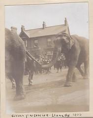 Circus Procession Llanelli Wales 1906 (Bury Gardener) Tags: uk blackandwhite bw elephant wales vintage circus oldies 1900s