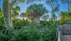 Tree of Life (joe.diebold) Tags: disney world waltdisneyworld disneyworld animalkingdom treeoflife sunset bluesky animals disneyanimalkingdom oasis toughtobeabug nature florida themepark canon