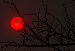 Sun through the ash clouds (sue2028) Tags: sun tree sky red ash fire dark wildfire losangeles california branches outdoors nature